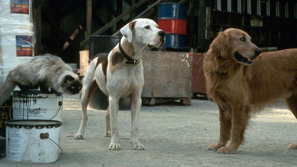 Ein tierisches Trio - Wieder unterwegs - Bildquelle: Foo