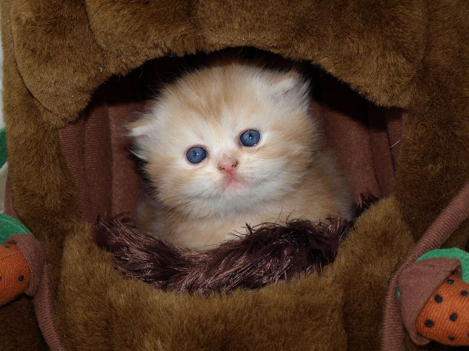 cat-1152812_1280 - Bildquelle: Pixabay